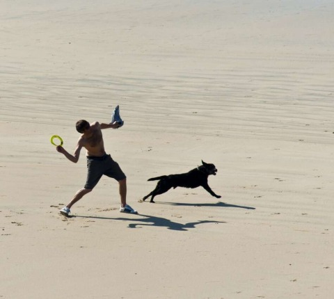 It's a dog's life! Our Latitude 50 holiday cottages at Daymer Bay put you within ball's throw of the sand!